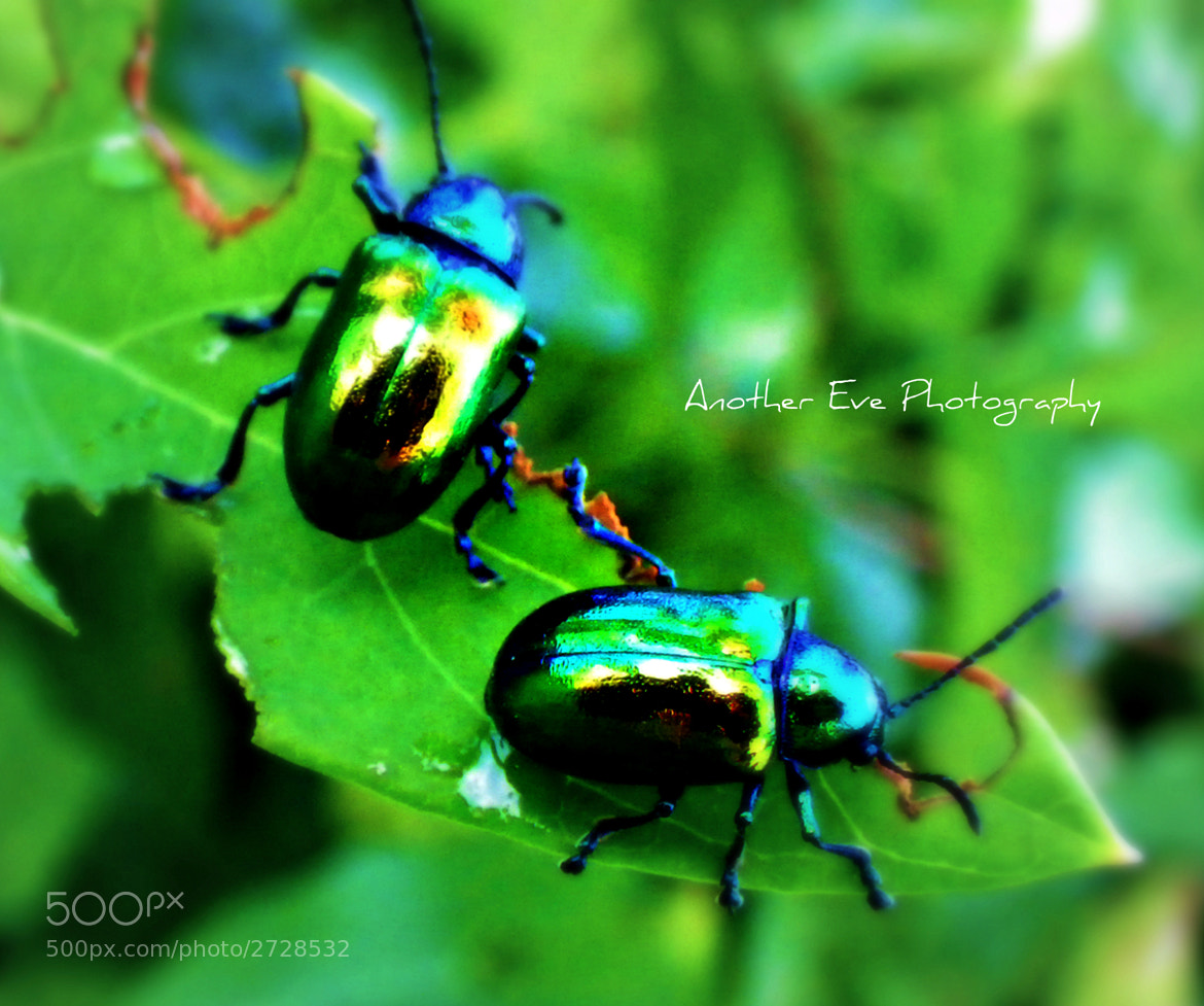 Photograph Metallic Pair by Tessi Storie on 500px