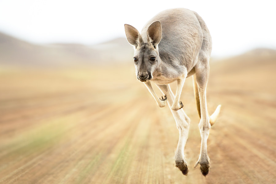 Speedy Skippy by Irca & Jacky K. on 500px.com