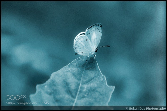 Photograph Tiny Butterfly ♡ by Bukan Das on 500px