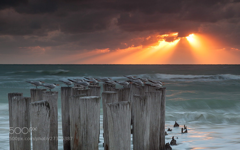 Photograph Bird Poles by Ingo Meckmann on 500px