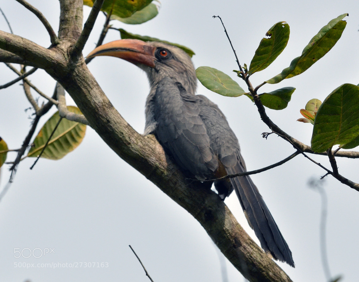 Photograph Shy Hornbill by Bee Buzz on 500px