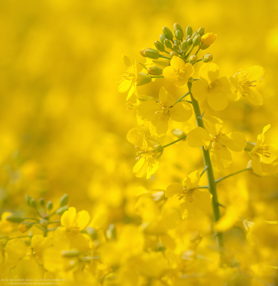 Photograph YELLOW II by jo williams on 500px