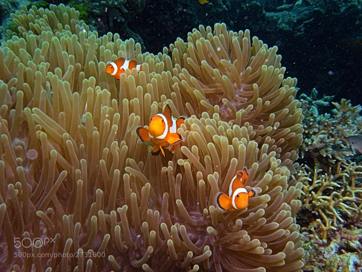Photograph Little Nemo and his friends by Edzo Boven on 500px