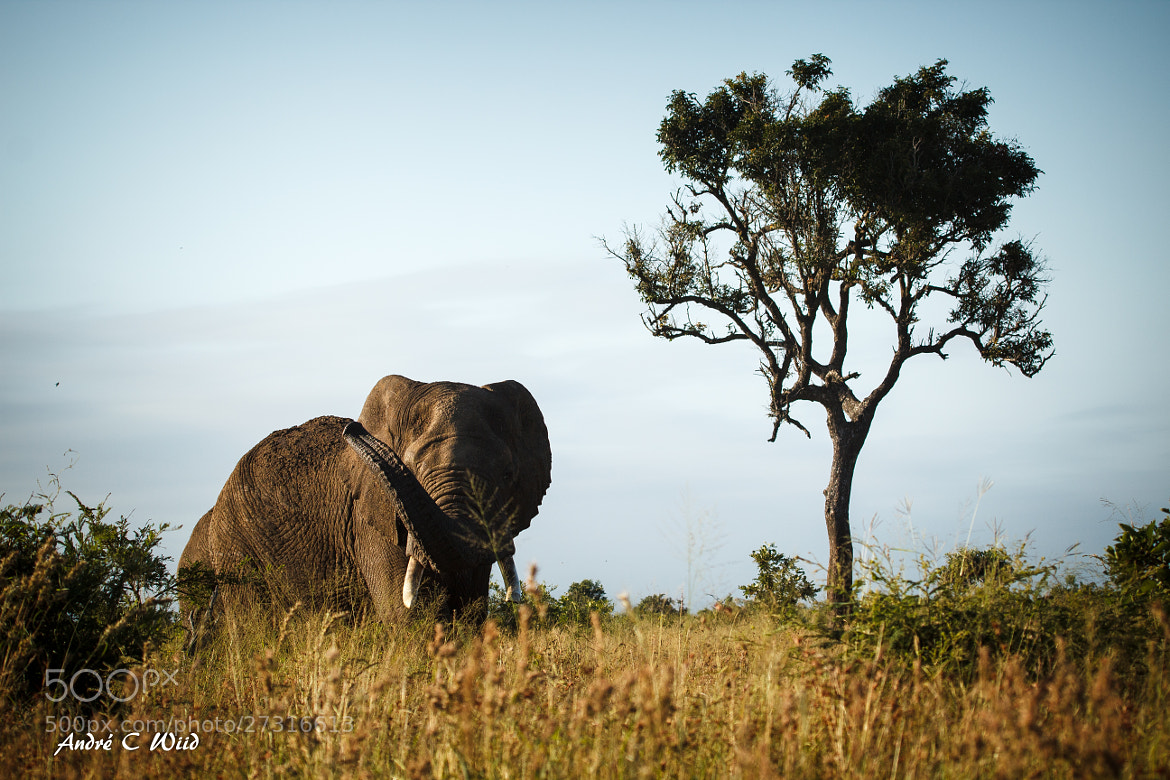 Photograph Majestic Giant by Andre Wiid on 500px