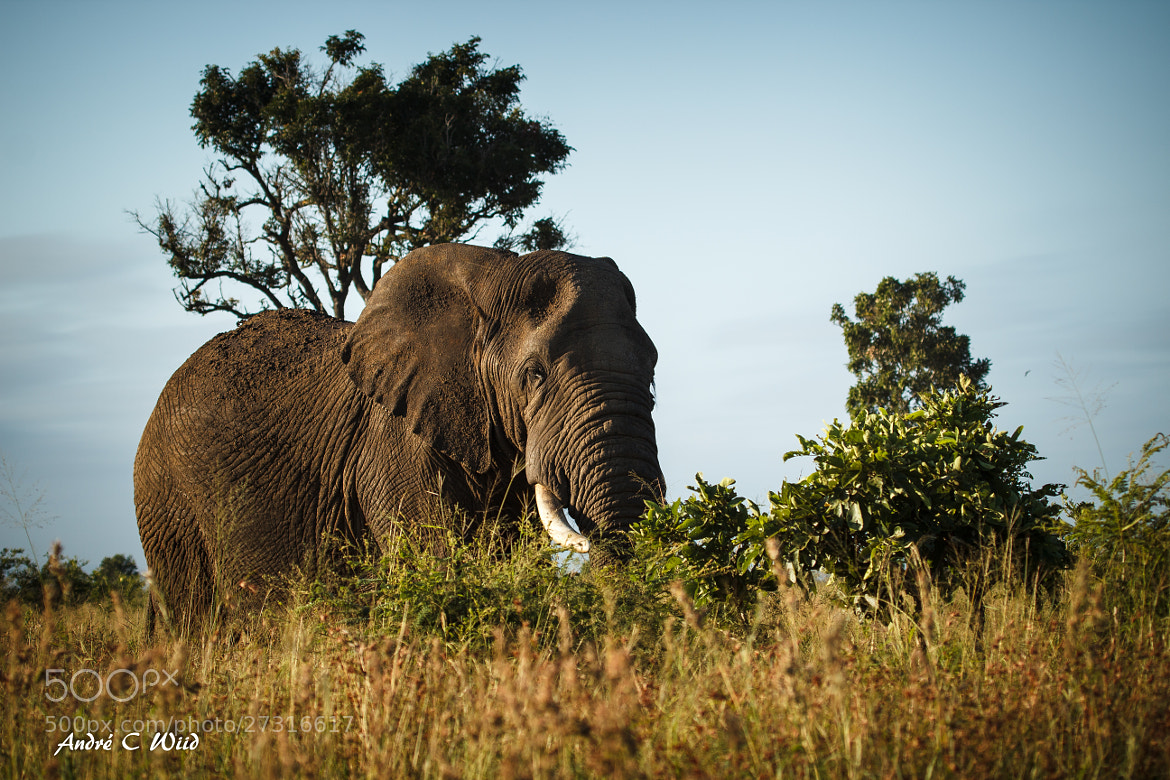 Photograph An amazing animal by Andre Wiid on 500px