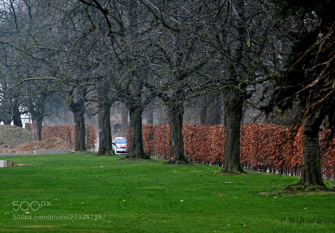 Photograph Rally entre árboles/ Rally between trees by losdisparosdepablo  on 500px