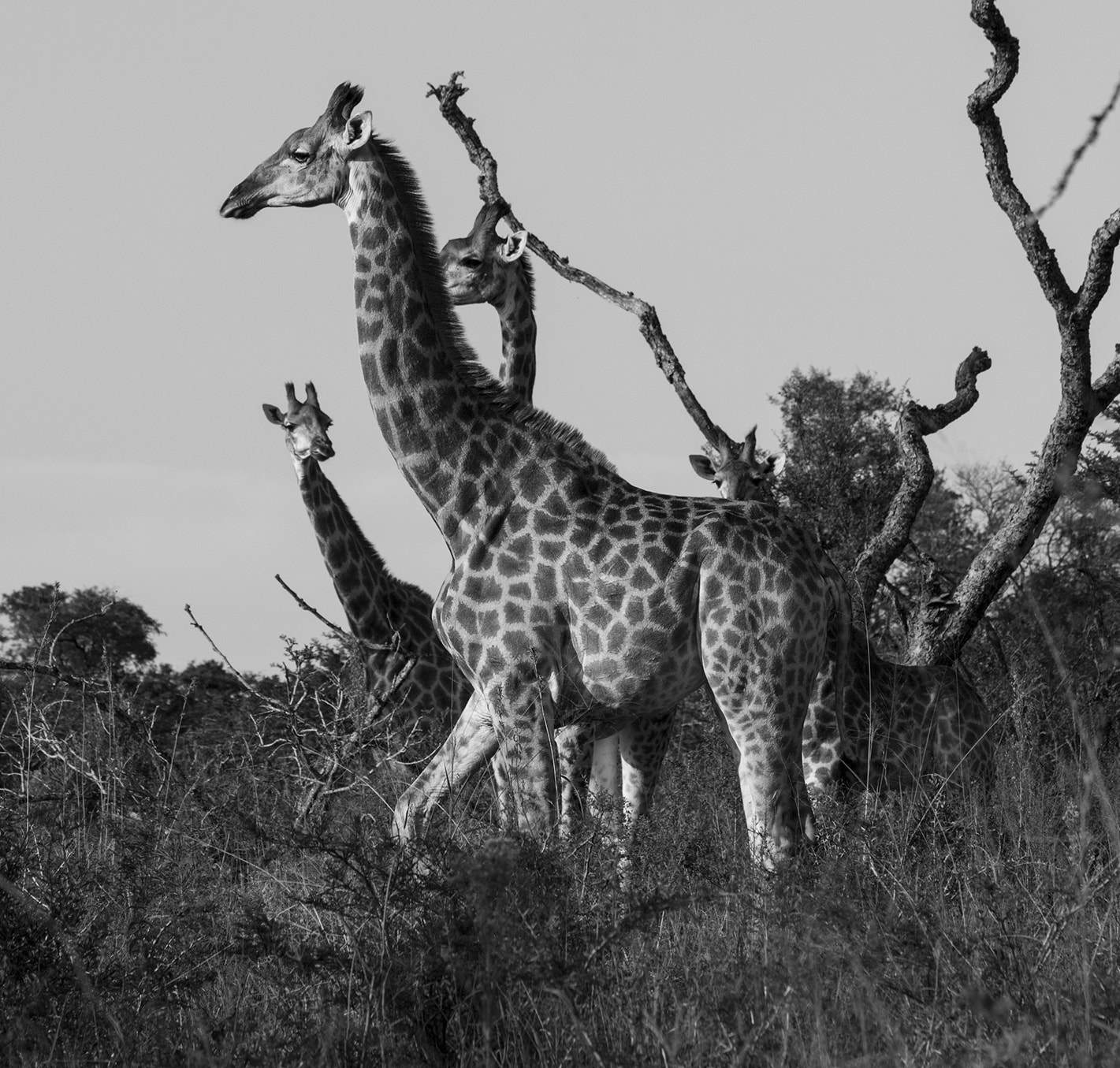 Photograph Standing Tall_B&W by Roger Fanner on 500px