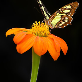 Orange Nectar  by Sharon Smith (slsmith10)) on 500px.com