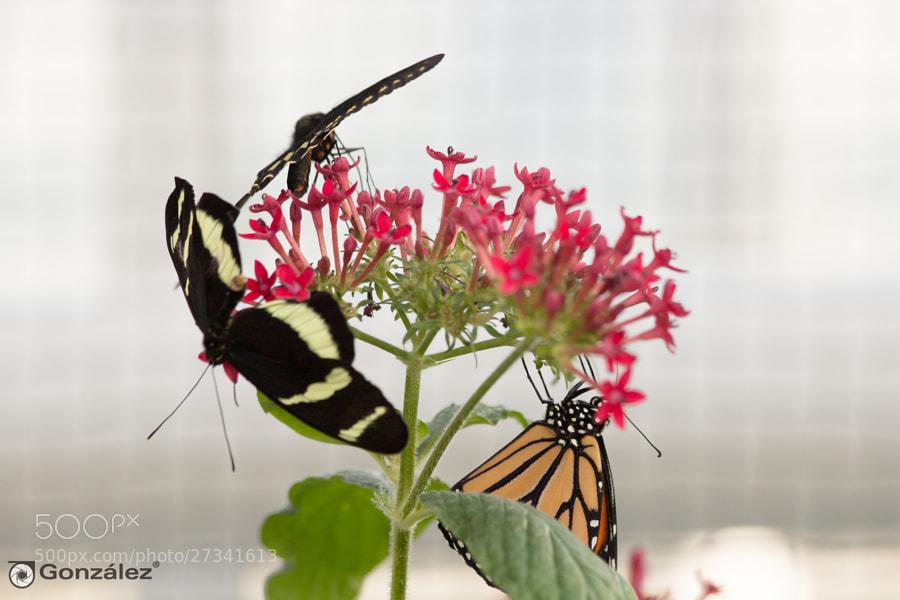 Bunch of Butterflies by Juan Carlos González Delgado (jcgonzalezdelgado)) on 500px.com