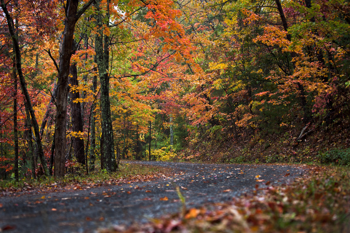 Photograph Country Road Smokey Mountains by Wes Head on 500px