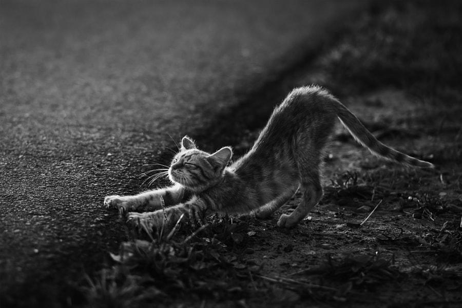 Gymnastics, автор — Evgeny Salnikov на 500px.com