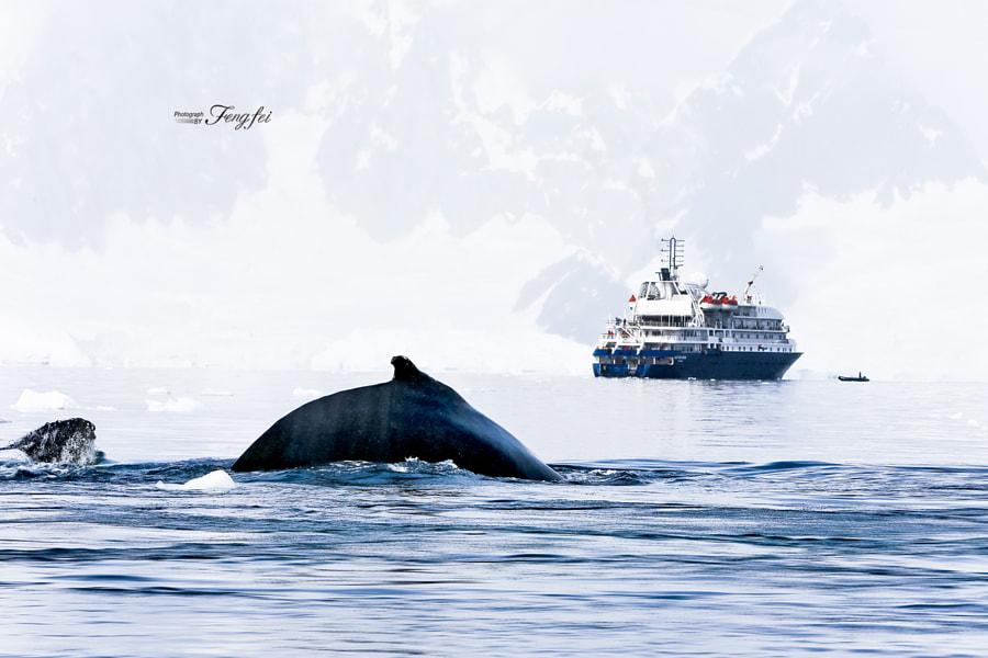 Meeting at the Antarctica, автор — Rose Lee на 500px.com