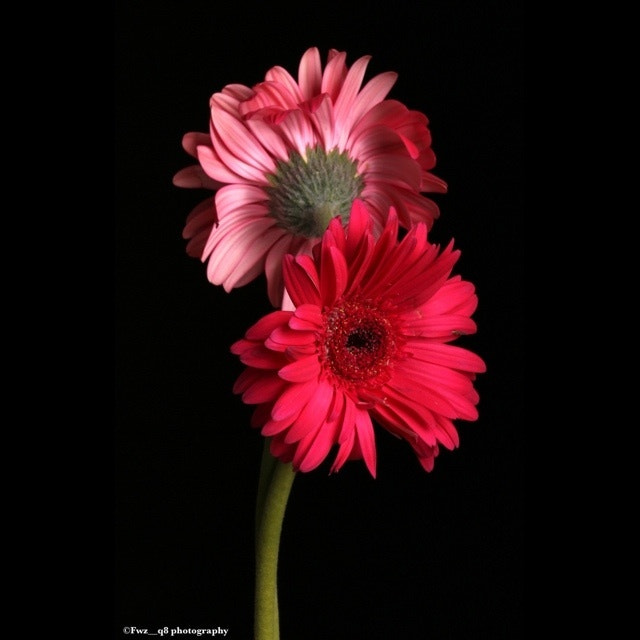 Photograph Flower by Bu_ALFoOoZ  on 500px