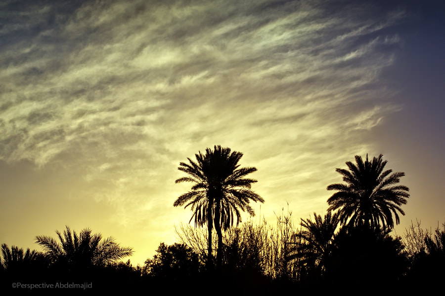 Photograph The early morning by A.A abdelmajid on 500px