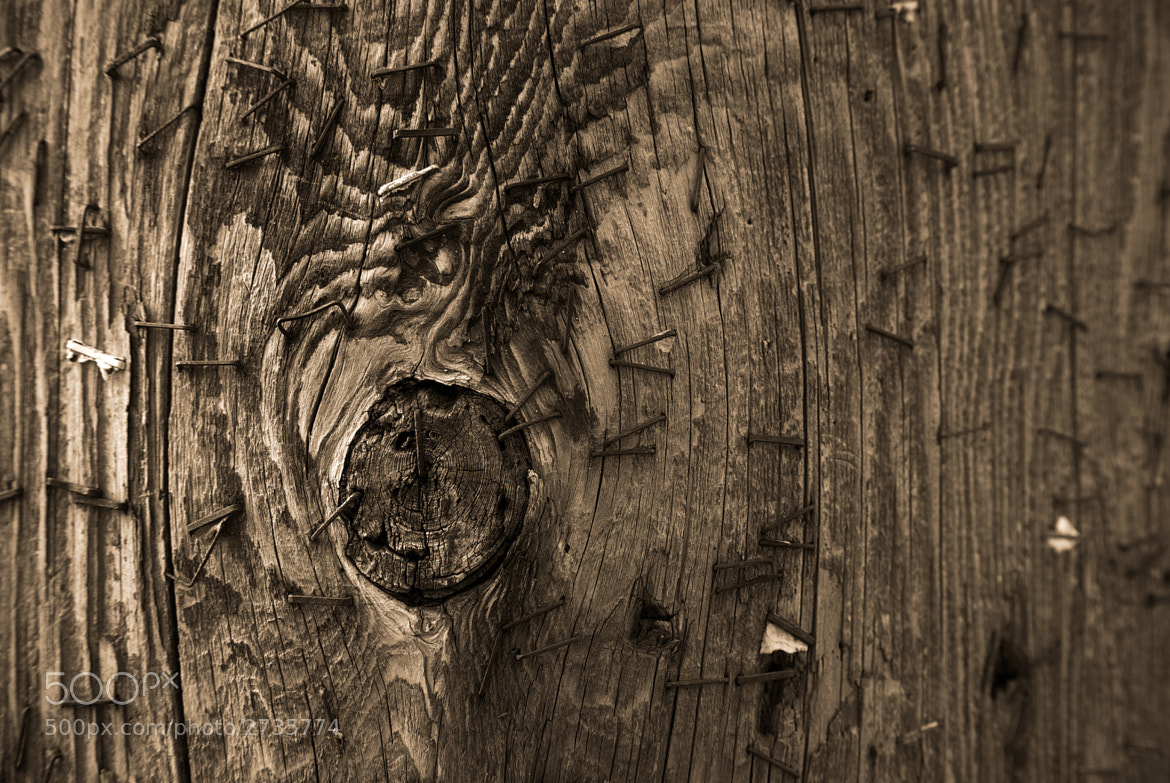 Photograph Wood by Zee Kid Leung on 500px