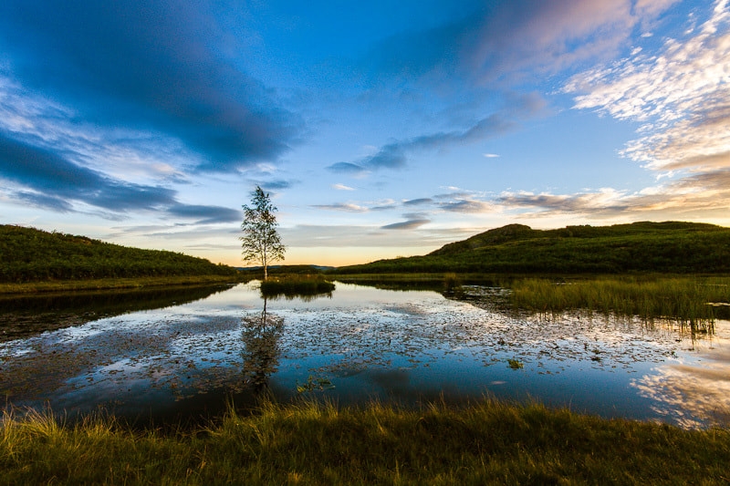 Photograph Lily Tarn by David Bell on 500px
