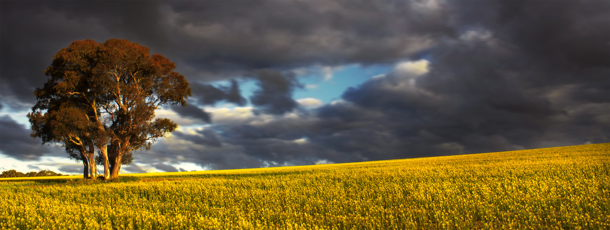 Photograph Spring Is Here || CANOLA by Rhys Pope on 500px