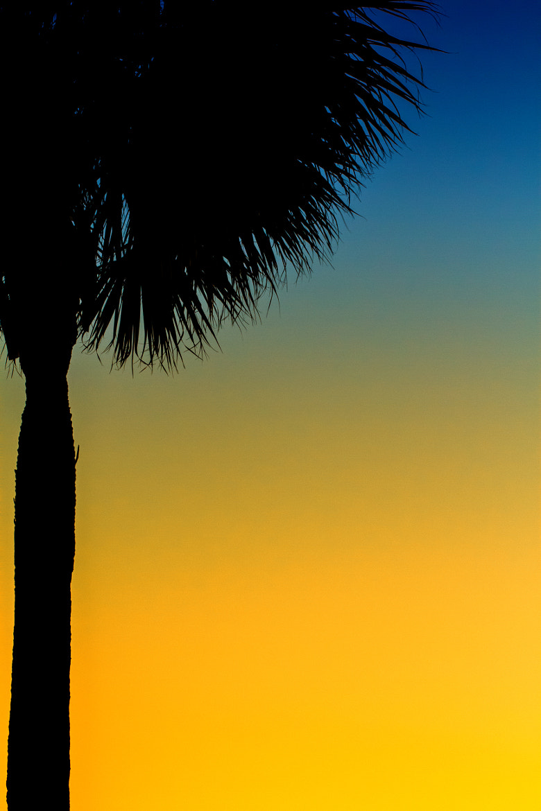 Photograph Palm Trees by Andres Trujillo on 500px