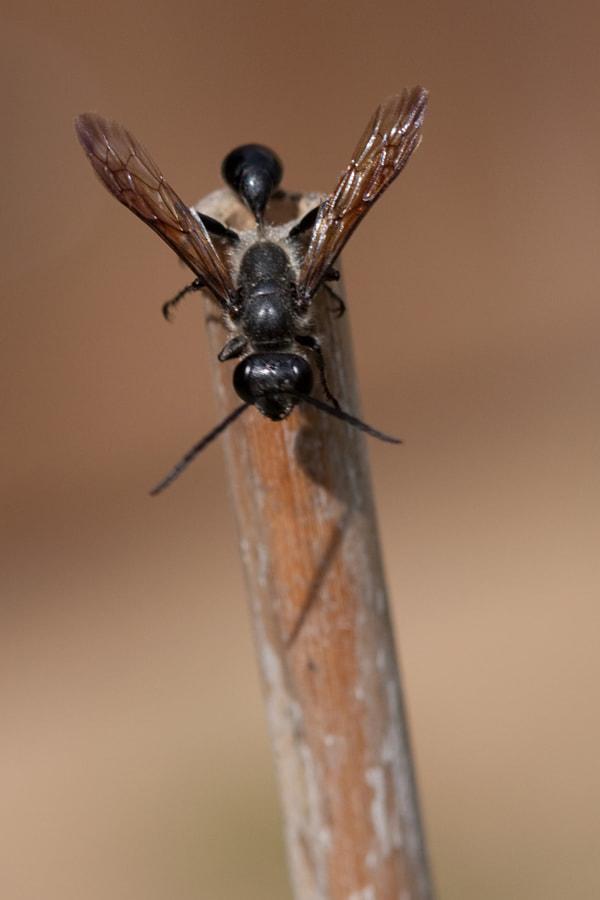 Taille de guèpe (tiny little waist.) de Christine Druesne sur 500px.com