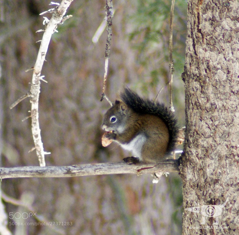 Photograph Pinecone Decimator by su piatt on 500px