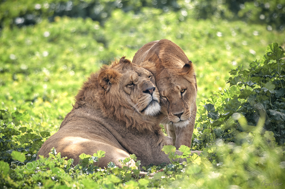 Photograph Affection by Omer Nave on 500px