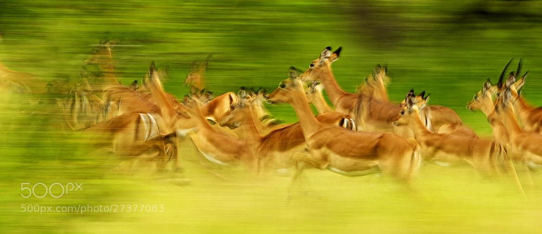 Photograph Run along then. by Rudi Hulshof on 500px