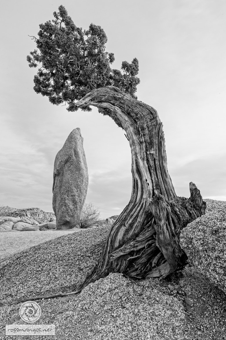 Photograph Juniper Rock by Ross Manges on 500px