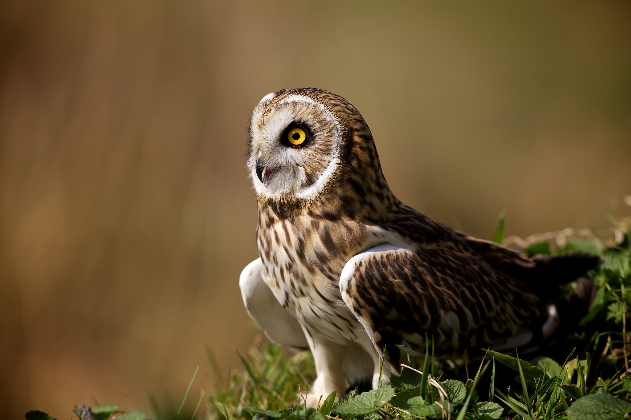 Photograph today i'm a sphinx! by Mark Bridger on 500px