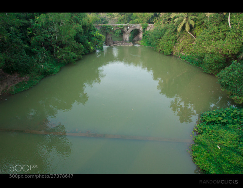 Photograph The bridge to green by Syam  on 500px