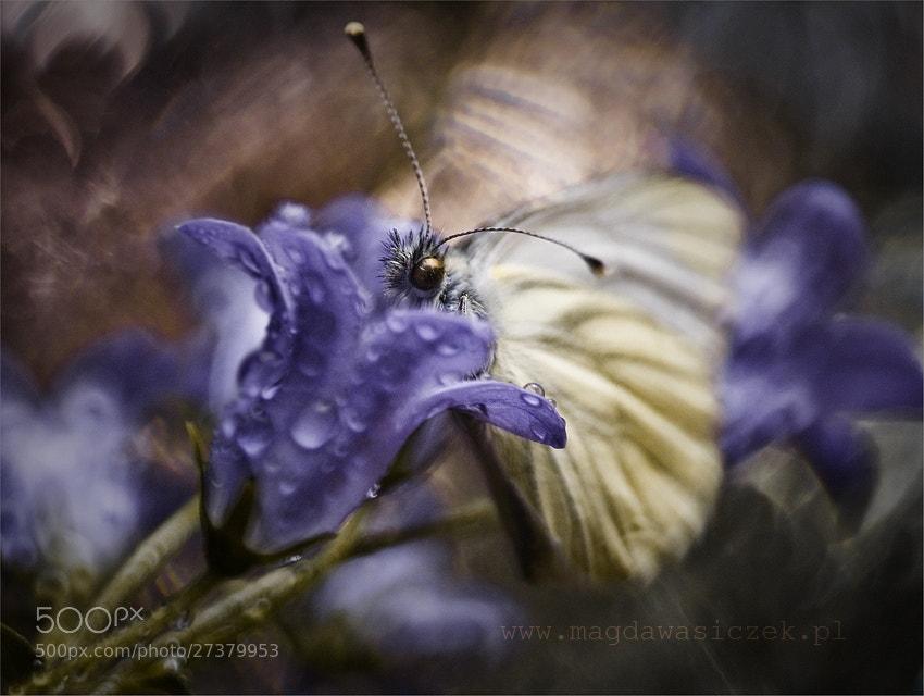 Photograph Golden Eye by Magda Wasiczek on 500px