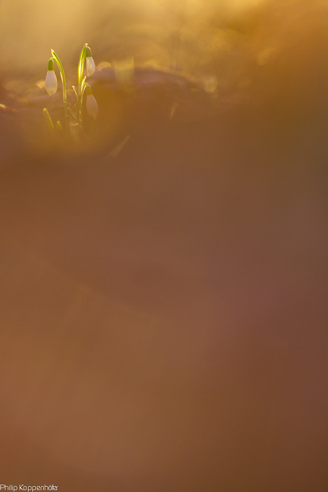 Photograph { Rising. } by Philip Koppenhöfer on 500px