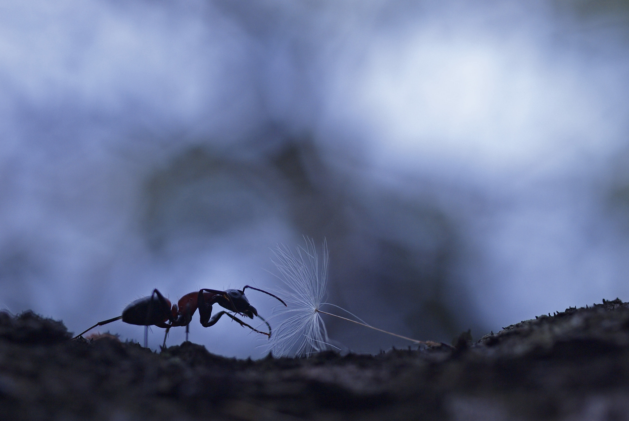 Photograph Fluff with ants by Haru Digital phot on 500px
