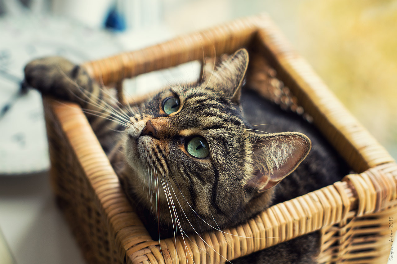 Photograph Cat in a box by Artem Sargison on 500px