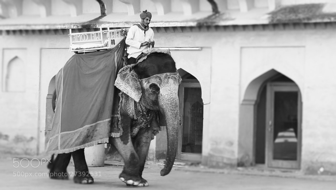 Photograph Elephant Ride by Yashovardhan Sodhani on 500px