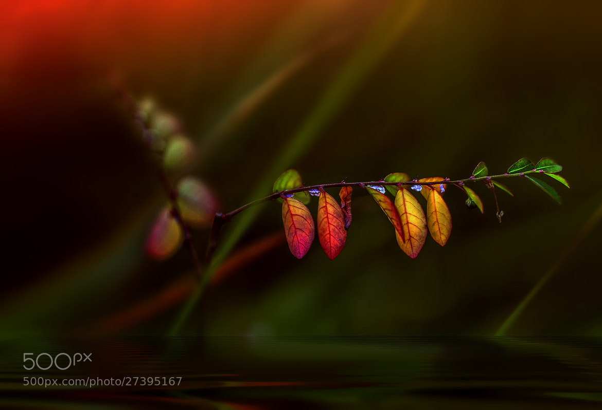 Photograph Small colorful leaves by Eleonora Di Primo on 500px