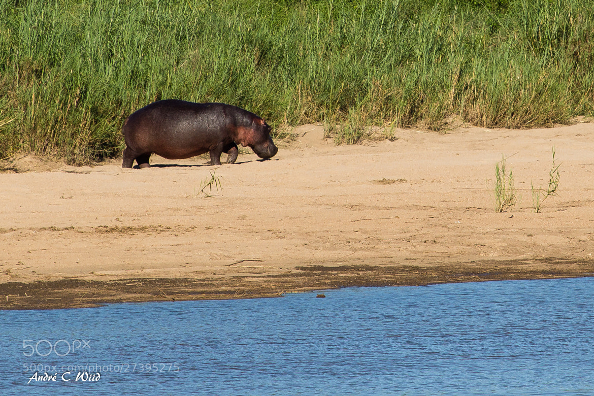 Photograph Heading to the water by Andre Wiid on 500px