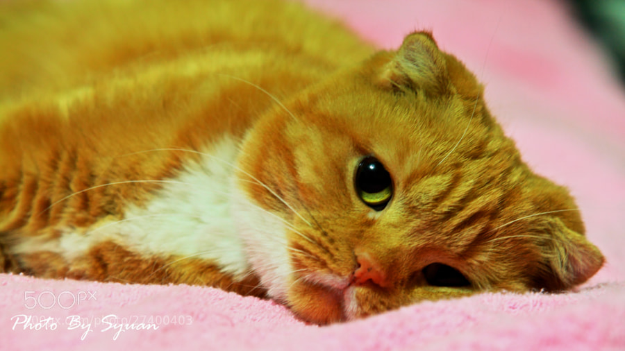 Photograph Meow by Hsuan-Yu Chuang on 500px