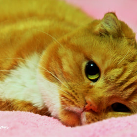 Meow by Hsuan-Yu Chuang (Syuan520)) on 500px.com