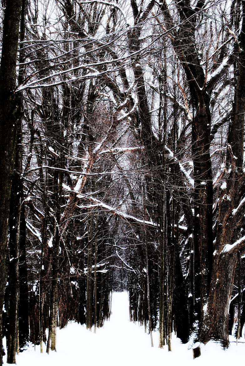 Photograph Winter Wonderland by Michelle * on 500px
