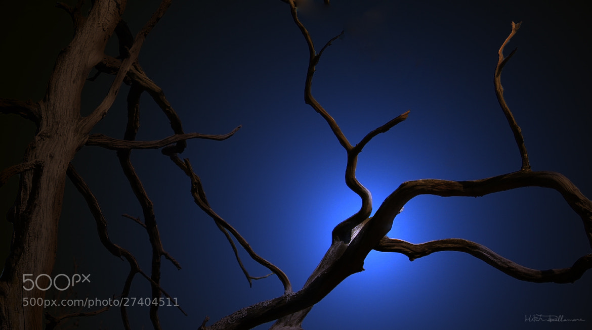 Photograph Blue tree by Michel Bellemare on 500px