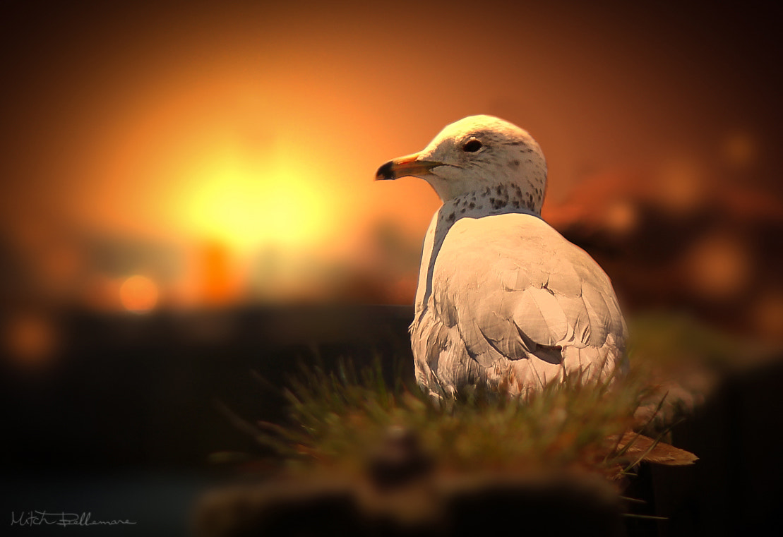 Photograph Resting bird by Michel Bellemare on 500px