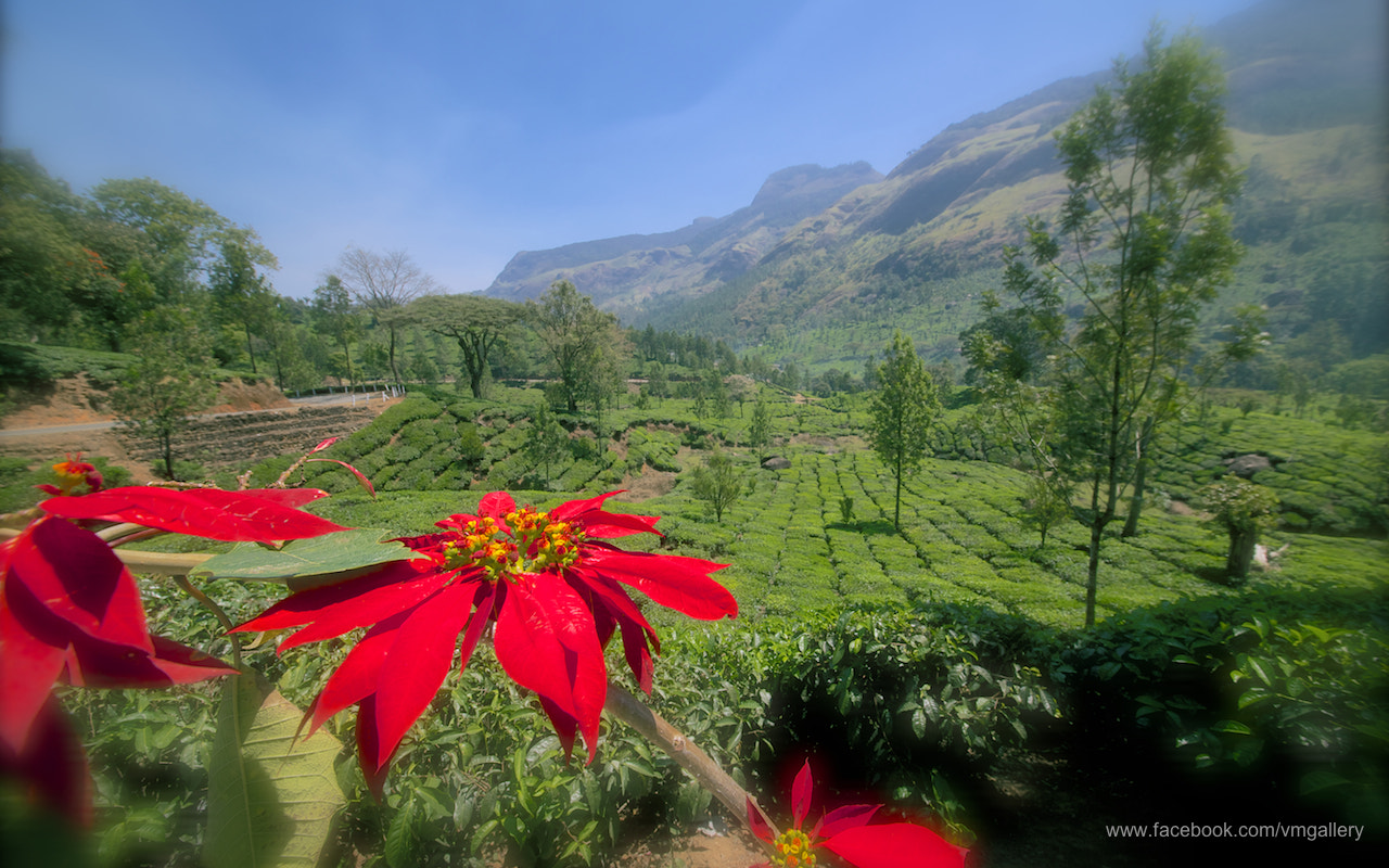 Photograph the valley filled with tea plantations by Venkatesh Murthy on 500px