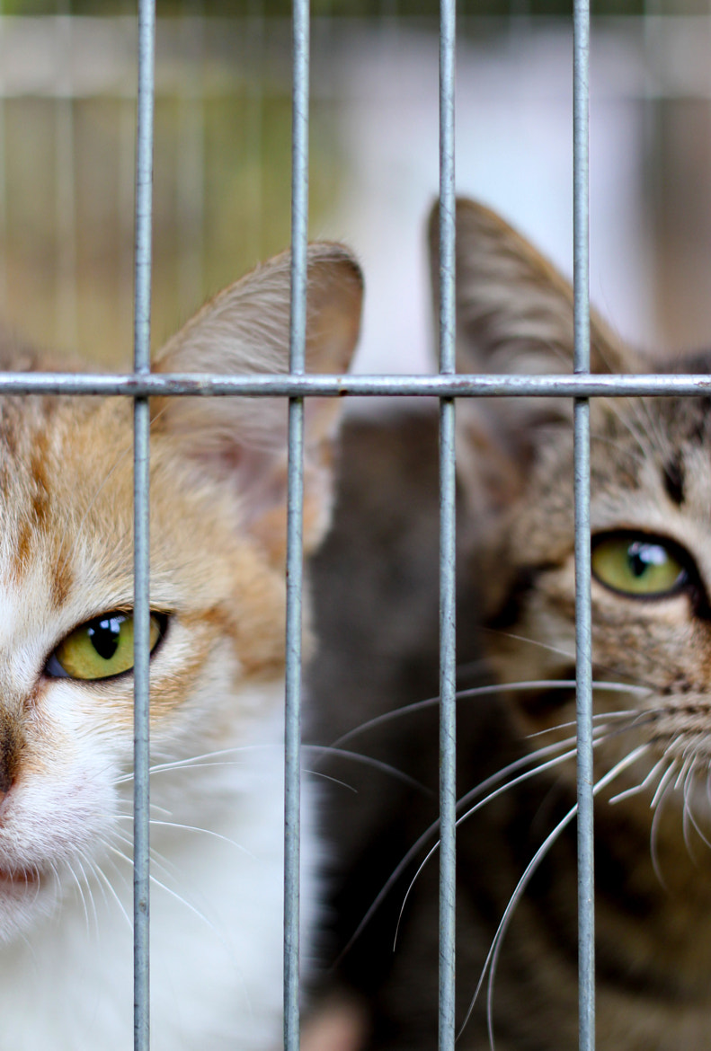 Photograph Cats by Just My Hoppy on 500px