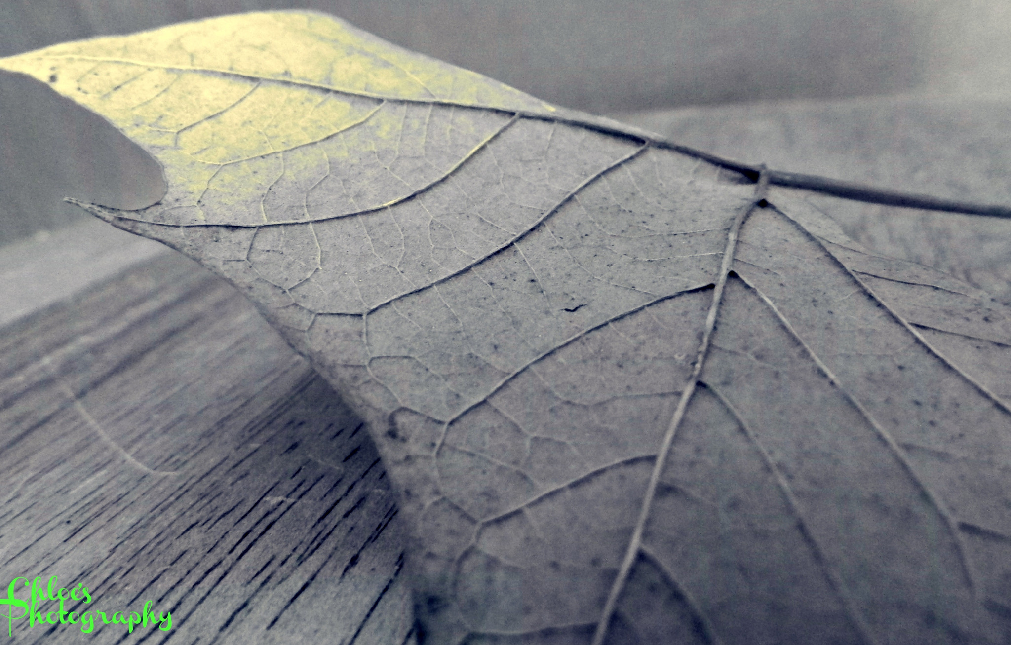 Photograph An expression of a leaf by Chloe Zentkovich on 500px