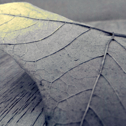 An expression of a leaf