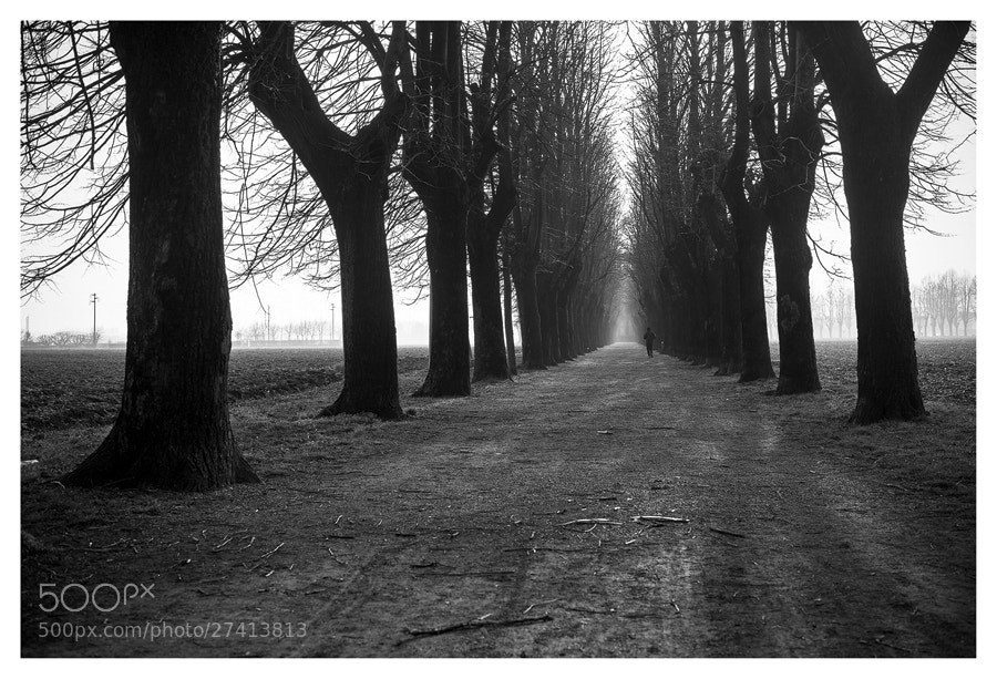 Photograph running alone in the cold by FeFoPhotography  on 500px