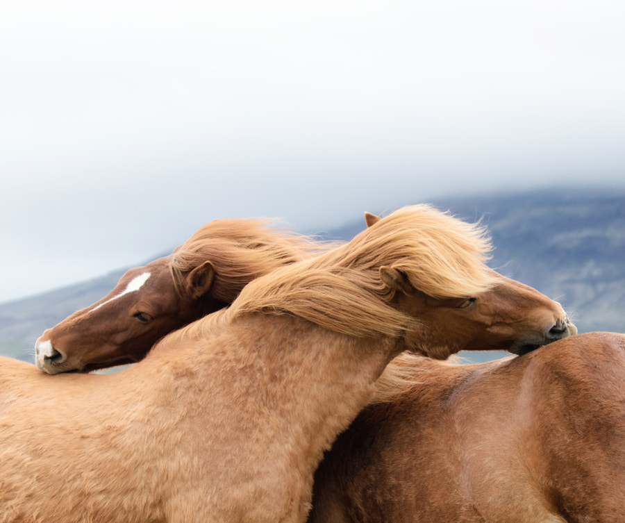Together by Kailee Mandel on 500px.com