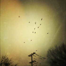Birds by Andrew B. White (andrewbwhite)) on 500px.com