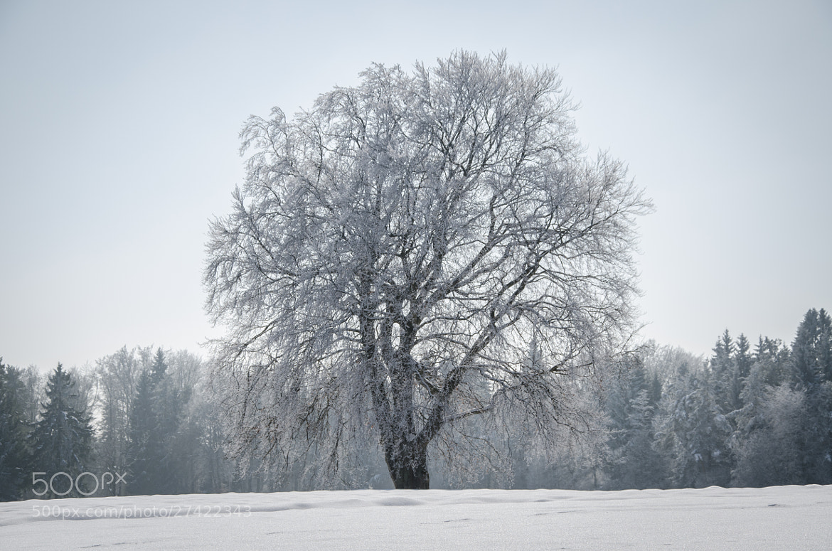Photograph Winter tree by Andy Vobiller on 500px