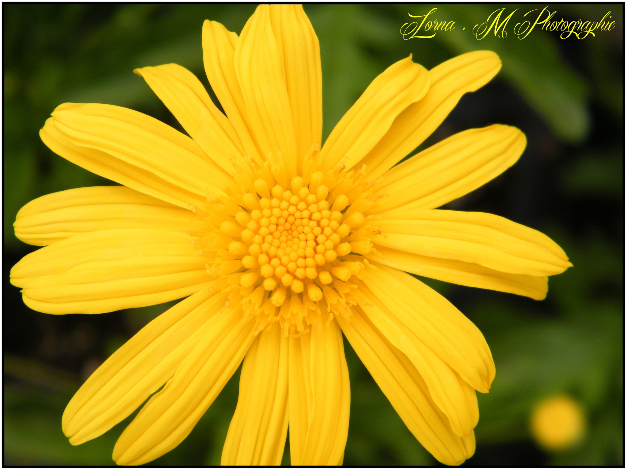 Photograph Macro by Lorna Mantelet on 500px